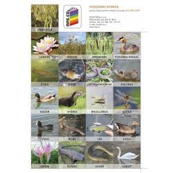 0275P2 Pexeso Podzimní rybník (Já a můj svět 2)